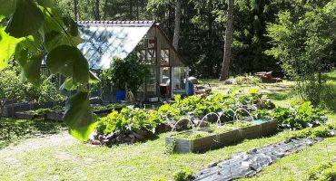 Avoimet puutarhat